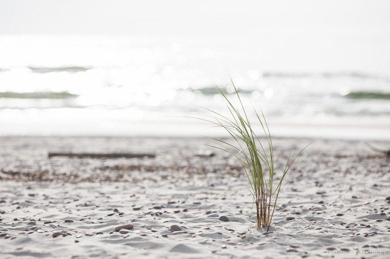 Kurische Nehrung: Bewuchs am Strand