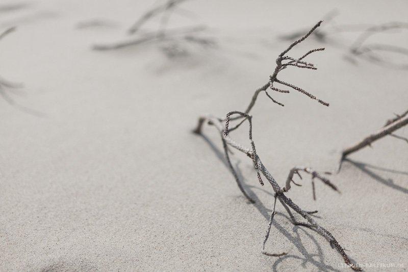 Kurische Nehrung: Ast im Sand