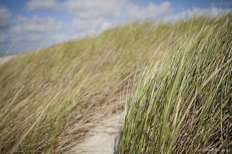 Kurische Nehrung: Strandgras im Wind