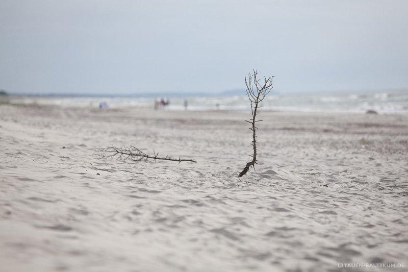 Kurische Nehrung: Abgestorbener Ast am Strand