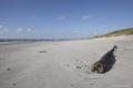 Kurische Nehrung: Strand mit Treibgut