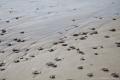 Steine am Ostseestrand auf der Kurischen Nehrung