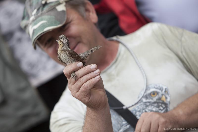 Windenburger Eck / Ventės ragas: Ornithologe mit Wendehals-Vogel